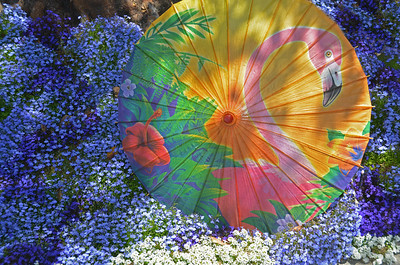 May 25  While walking past this beautiful flower bed today, I was inspired to set my parasol amongst the color.