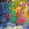 May 25