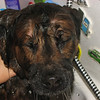 "07/01/11 - Wet by Madi age 7<br /> <br /> I went to give Blaze a bath in the tub yesterday and appointed Madi to take pics.  I really like the detail and dripping water she captured in this one.  Blaze did survive the process and smells much better.  Her fur is fluffy and pretty especially after being brushed out one more time this morning.  <br /> <br /> Collage of more of the process:<br /> <br /> <a href=""http://fotomom.smugmug.com/Nature/June-2011/17389966_Qt2vxj#1362619823_9qS8ZgB"">http://fotomom.smugmug.com/Nature/June-2011/17389966_Qt2vxj#1362619823_9qS8ZgB</a>"