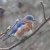 01/06/14 - Mr. Bluebird