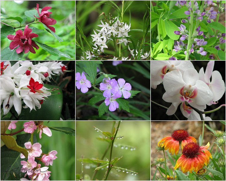 "04/26/11 - NC Zoo Flowers<br /> <br /> The two white flowers center row were taken inside...the rest outside.  I thought they were pretty and wanted to share.  <br /> <br /> The boys and I did have fun at the Museum of Life and Science in Durham yesterday.  I got several nice butterfly shots in the butterfly house:<br /> <br /> <a href=""http://fotomom.smugmug.com/Nature/April-2011/16471743_zf79D#1266397651_FvwDbRp"">http://fotomom.smugmug.com/Nature/April-2011/16471743_zf79D#1266397651_FvwDbRp</a><br /> <br /> Mom it tickles!<br /> <br /> <a href=""http://fotomom.smugmug.com/Nature/April-2011/16471743_zf79D#1266393630_FmzGjdG"">http://fotomom.smugmug.com/Nature/April-2011/16471743_zf79D#1266393630_FmzGjdG</a><br /> <br /> Back to work/school for us today:-(  Wishing I could spend the day trying to get my house back in order...<br /> <br /> HAGD,<br /> Maryann<br /> <br /> I posted the normal time this morning but then accidentally hit the hide button:-(  Joey has swimmer's ear, and I've been at the doc/'pharmacy this AM and was not around to fix sooner than now (1PM ET).  My Blackberry will NOT show me the hide button so I can uncheck it...frustrating."