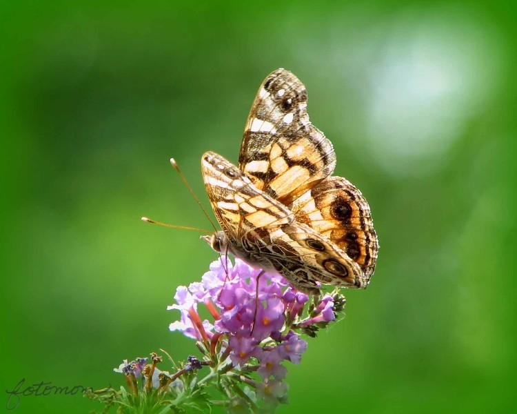 06/30/15 - Butterfly