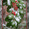 12/18/10 - Natural Christmas<br /> <br /> I took the foreground and background shots on Thursday and then combined them yesterday to create this 'card'.  Both were fairly neat shots, and I thought they were even better together.  The holly and berries hang over my back deck:-)  All this shot needs is a cedar waxwing or cardinal...<br /> <br /> The boys and I went to a light display last night, Lights on the Neuse near Clayton.  You go through on a hay ride. It was hovering around 30, and it's a 35 minute ride.  We were so glad we went.  Very pretty!  But, it was darn cold.  I have lots of pics from that that I'd love to share.  Maybe tomorrow...sigh.<br /> <br /> Thanks for the feedback in my continuing card series.  I fear I will be out of ideas by the time Christmas is here.  Maybe I'll save one to post then.<br /> <br /> HAGD,<br /> Maryann
