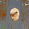 "02/01/12 - Mirror, Mirror on the Tree  My Blog:  http://maryanng.blogspot.com/2012/02/mirror-mirror-on-tree.html  Donnie said you all had him blushing with the comments on his portrait yesterday.  Thank you.   Unfortunately I came down with a fever high enough yesterday to give us both a scare.  Fever when you're having chemo is not a good thing.  Thank goodness for 24-hour pharmacies.  They put me on an antibiotic and told me I could take Tylenol and I'm doing better this morning.   I didn't get to take any new pics yesterday:-(  I did rework this tree picture while Donnie was going to the pharmacy.  I needed something to soothe how I was feeling.  I took this shot of the tree at the Eno River on Monday and had in mind Mirror Mirror on the Tree or something like that.  I wanted to put a picture in the hole were the branch had been but wasn't sure what picture.  Me?  An oasis?  What?  Last night I quickly picked the West Point Mill shot.   I used <a href=""http://johnloguk.smugmug.com/"">John Bennett's</a> pp technique on the tree shot to give it a pseudo hdr look.  I wanted to emphasize the lines in the tree.  The highlights, contrast, and shadow sliders are all pushed all the way to the right.  I simply did a select and cut of the hole and then slid in the layer of the mill shot which I then reduced in size and converted to a sepia sortof color.   I don't really think what I did has the pizzazz I was hoping for, but it's what you get for today considering how yesterday went.  Here's a reverse version where the tree is B&W and the mill shot is in full hdr color.   <a href=""http://fotomom.smugmug.com/Yates-Mill-Pond/West-Point-Mill-Eno-013012/21265982_8TgVZp#!i=1694223955&k=4VC4nkp"">SmugMug Link</a>  HAGD, Maryann"