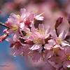 02/25/14 - Spring Blooms