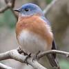 01/23/15 - Bluebird
