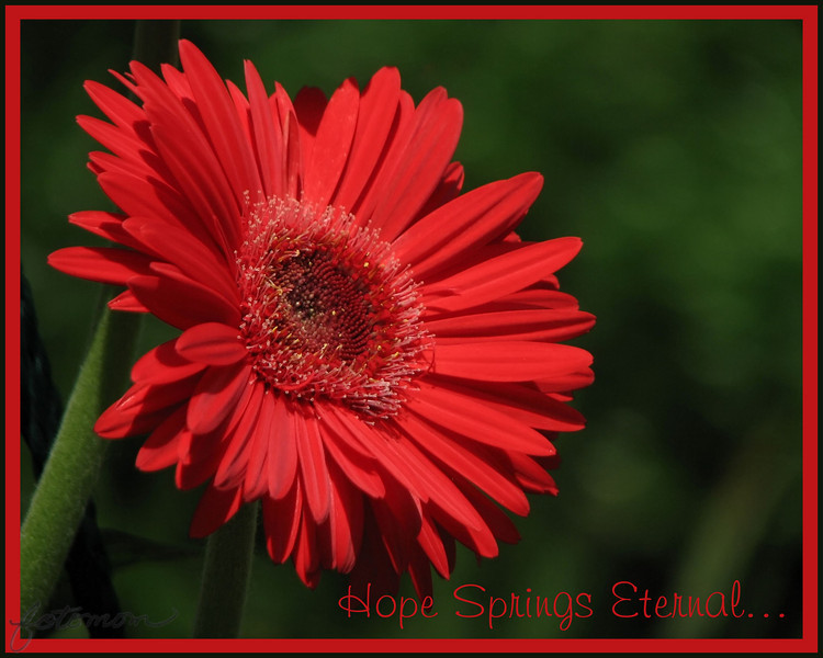 06/26/11 - Hope Springs Eternal<br /> <br /> A shot from last week taken in the Kidd Family Garden that I cropped to maximum 8X10, ran a noise filter on, and got rid of one distracting petal from another flower near the top center.  I used Picasa to add a thick red and then thin green border (grid collage two times).  I also added the text with Picasa.  <br /> <br /> Things with my dad are about the same.  I'll visit him one more time this morning and then head back home to the boys.  Thanks so much for your support yesterday.  It was a tough and emotional day.  <br /> <br /> My high school 25th reunion happened to be last night.  I really needed to be around some people, so I went.  It was nice to see old classmates and lose myself for a bit taking some pics to capture the event.  <br /> <br /> HAGD,<br /> Maryann