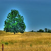 "06/27/11 - Into the Distance - The Gatekeeper - A Composition in Blue and Gold - Field of Freedom<br /> <br /> I've been studying this tree to/from my dad's house for a couple of years now.  It's on NC 200, and you see it just as you round a curve.  It was a rough trip home yesterday.  I got so upset at the hospital that I felt drained of every bit of energy I had.  I ended up making several stops to take pics in an effort to refresh myself, and this was one of them.  <br /> <br /> The original shot which I have done tons of stuff to is here:<br /> <br /> <a href=""http://fotomom.smugmug.com/Nature/June-2011/17389966_Qt2vxj#1356216196_HtB9tdX"">http://fotomom.smugmug.com/Nature/June-2011/17389966_Qt2vxj#1356216196_HtB9tdX</a><br /> <br /> I realize the colors are over the top but I liked the surreal result.  Maybe someone's dreams...<br /> <br /> HDR to start with then Picasa graduated tint to blue up sky then saturated and auto contrast.  Cropped to 8X10.<br /> <br /> I was told that my dad isn't going to pull out of this one...<br /> <br /> Thanks for your comments on my red flower from yesterday.  I'm sorry that I wasn't able to reciprocate. <br /> <br /> HAGD,<br /> Maryann"