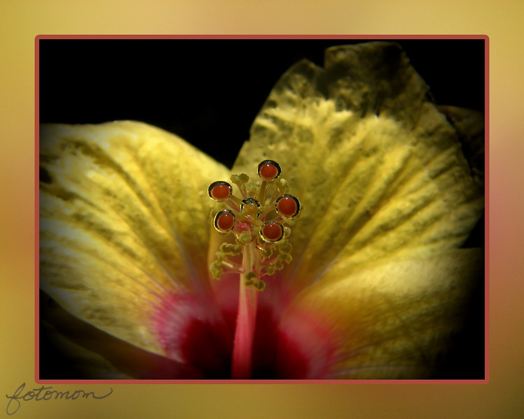 "09/02/11 - Wet Hibiscus (I'm fresh out of fancy titles this morning:-)<br /> <br /> Blog:  <a href=""http://maryanng.blogspot.com/2011/09/wet-hibiscus.html"">http://maryanng.blogspot.com/2011/09/wet-hibiscus.html</a><br /> <br /> I have a flower water globe vase that looks like this:<br /> <br /> <a href=""http://www.retailcloseoutmall.com/flowerwaterglobevase.aspx"">http://www.retailcloseoutmall.com/flowerwaterglobevase.aspx</a><br /> where you submerge a flower in water and it floats suspended in the water.  There is a plastic base within the black outer base at the bottom that has several holes in it so you can stick the stem(s) in the holes to hold the flower down.  You put the flower in upside down and then right the globe.  The plastic base might have uses outside of this vase too.  The flowers last in the water globe vase for several days looking quite fresh.   <br /> <br /> I'm not sure where you can buy these now, but I got mine originally at Gardener's Supply Company:<br /> <br /> <a href=""http://www.gardeners.com"">http://www.gardeners.com</a><br /> <br /> I haven't had great success in taking shots of flowers that are inside it, but the flowers sure are pretty when wet.  <br /> <br /> Yesterday I put a yellow hibiscus in the globe and took a few shots.  I think I like this one the best since the stigmas have the water bubbles around it.  Flower part diagrams and description:<br /> <br /> <a href=""http://www.backyardnature.net/fl_stan_.htm"">http://www.backyardnature.net/fl_stan_.htm</a><br /> <br /> The other two shots that I liked are:<br /> <br /> <a href=""http://fotomom.smugmug.com/Inspirations/Inspirations/10386893_GcQ4rP/1459465902_XXkHwsk/1455570949_xFRp7DK/1455570949_xFRp7DK#1459468099_VtB7LPM"">http://fotomom.smugmug.com/Inspirations/Inspirations/10386893_GcQ4rP/1459465902_XXkHwsk/1455570949_xFRp7DK/1455570949_xFRp7DK#1459468099_VtB7LPM</a><br /> <br /> and:<br /> <br /> <a href=""http://fotomom.smugmug.com/Inspirations/Inspirations/10386893_GcQ4rP/1459465902_XXkHwsk/1455570949_xFRp7DK/1455570949_xFRp7DK#1459468114_6dXjtNn"">http://fotomom.smugmug.com/Inspirations/Inspirations/10386893_GcQ4rP/1459465902_XXkHwsk/1455570949_xFRp7DK/1455570949_xFRp7DK#1459468114_6dXjtNn</a><br /> <br /> Hey, it's Friday and for us US folks it's a long weekend.  TGIF!  Well, I'm on call and the boys are away for the weekend but still!  I've got some fun planned anyway;-)<br /> <br /> HAGD,<br /> Maryann"
