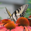 07/19/15 - Butterfly at Home Depot