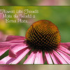05/23/11 - Flowers Like Friends Make the World a Better Place<br /> <br /> Just having fun making cards again.  A coneflower shot I took at the Museum of Life and Science on Saturday along with a misfired out of focus 'matching' coneflower shot for the background.  Frame layers created in PSE7 but text added in Picasa.  I don't know how many fonts you all have on your PSE or PS or whatever you use, but I find the number of fonts, well I guess the actual selection of fonts, in PSE7 to be limiting.  My level of Picasa has many more useful fonts AND as you scroll over them the text changes before your eyes so you can see if you like them or not.  Of course with someone like me, more choices to work with might be an issue, but oh well:-)<br /> <br /> Thanks for your comments on my butterfly shot from yesterday.<br /> <br /> HAGD,<br /> Maryann<br /> <br /> Note:  Reworded text to convey more useful fonts vs. more fonts in number.