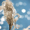 "01/30/11 - Swaying in the Breeze<br /> <br /> I took this shot at Crowder Park's wetland area yesterday.  It was very windy and very sunny.  The bokeh is the water behind the ornamental grass moving in the wind.  I took as many shots as the boys would tolerate and thought this one was best.  I was like a kid in a candy store with the light dancing around the lens.  Some frames the wind blew the grass right out of the frame!  <br /> <br /> Picasa Lucky adjustment and square crop.  <br /> <br /> This was over at Lake Wheeler a bit later:<br /> <br /> <a href=""http://fotomom.smugmug.com/Nature/January-2011/15307871_7ekG3#1171580836_ivuFo"">http://fotomom.smugmug.com/Nature/January-2011/15307871_7ekG3#1171580836_ivuFo</a><br /> The water just would not stop glistening yesterday:-)<br /> <br /> We hit 3 parks total meeting up with friends at the last park for some more fun.  Would have felt warm if the wind hadn't been blowing so bad. <br /> <br /> Favorite kid shot of the day:<br /> <br /> <a href=""http://fotomom.smugmug.com/Nature/January-2011/15307871_7ekG3#1171565216_xnHPr"">http://fotomom.smugmug.com/Nature/January-2011/15307871_7ekG3#1171565216_xnHPr</a><br /> That's Joey and his new made friend Georgie on the Good Ship Crowder:-)<br /> <br /> I did more sitting on the sidelines yesterday than I wanted, but it was a good day for the kids.  The fever was gone most of the day but seemed back at bedtime again:-(  Couldn't be that I over did it.  Not me!  So far today I feel OK.  Dogs just won't ever let me sleep in.  In another life Sugar and Honey must have been roosters.  <br /> <br /> HAGD,<br /> Maryann"