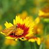 07/21/15 - Tiny Butterfly