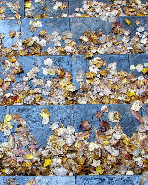 11/19/20 - Leaves on Slate<br /> OK, so I'm heading out of my office bldg. around 4:30 yeseterday and it is of course raining because when I work in the office and have an hour commute and a long walk in from the parking lot it HAS to rain, right?!?  I fumbled to get up my umbrella and pull my laptop pull case behind me.  I was thinking about how I had no POTD, and I was late for an appt. with no hope of getting there in time.  Sigh.  But, in front of me was this really cool  scene of wet leaves and slate.  I was truly wondering if I could manage to pick up my laptop pull case and get down the stairs without falling.  Suddenly it occurred to me that I should should take a picture.  What?!?  So, holding the umbrella over me, other people passing me by on the steps thinking I've lost it, etc. I take this.  Now, honest, I can't hold still very well at all and the camera was telling me that if I didn't hold still it would be blurred.  So I tried so hard not to breath or sway or move in anyway.  You would think I'd have mastered that by now but no.  Thankfully, when I looked last night, of the 8 or so shots I took this one was in focus enough to share.  I cropped and tweaked slightly (sharpen and make it a tad more blue), and here you go.  Boy was that a mouthful on no coffee yet......<br /> <br /> I am just floored that the lock shot was so popular yesterday.  Thank you all for making my day yet again.  How exciting.  It just makes me strive to want to bring you even better pictures! <br /> <br /> As always, have a great day,<br /> Maryann<br /> Time for coffee!