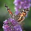 07/01/15 - Butterfly