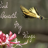 04/19/14 - Wind Beneath My Wings