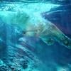 01/18/15 - Polar Bear