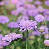 05/05/15 - Garden Hut