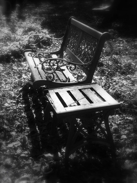 """11/07/09 - Soaking Up the Light<br /> This bench and table are in my yard facing one of my ornamental ponds.  In theory, I would go out here often to sit and enjoy the view, right?  Well, I don't sit much...  But, hey, it's really pretty in my yard especially with the early morning light shining on it.  I converted to B&W and added the soft blur.<br /> <br /> Thank you again for all the feedback on the mill shots.  I was back at the mill yesterday for the 3rd day in a row practicing and trying to get a good photo.  The wind was too high.  But, today will be sunny, 60+, and the wind will be less than 5mph, so I'm going to try one more time.  I've got it down now getting the sky to be a much better shade of blue to start out with, and if I bracket, I can come back home and even enhance the shots further.  I've learned a lot this week from trial and error and your help and encouragement.<br /> <br /> For the first time in a long time, I don't have some grand event to attend this weekend.  A brief rest before the holiday season kicks into gear I'm sure.<br /> <br /> It's not too late for US and Canadian residents to sign up for Project Feederwatch. Details here:<br /> <a href=""""http://www.birds.cornell.edu/pfw/"""">http://www.birds.cornell.edu/pfw/</a><br /> <br /> If some of you guys would like to friend me on Facebook, I'd love to hear from you on that forum as well.<br /> <br /> Best regards and HAGD,<br /> Maryann"""