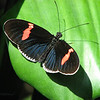 "04/29/11 - Magic Wings<br /> <br /> The butterfly house at the Museum of Life and Science in Durham is called the Magic Wings Butterfly House.  And, that it is.  It's a fairly large indoor tropical garden, aviary, and butterfly house, and we enjoy it every time we visit the museum.  You can see the emerging butterflies through a window, and at 3PM each day one of the volunteers brings out the new additions for a butterfly release.  The kids stand around arms outstretched hoping that when the volunteer puts a butterfly on top of their hand that they can 'hold' it for a few minutes.  Parents with cameras in hand hope for that priceless shot of their kid smiling with delight over their new 'friend'.  <br /> <br /> Here are some pics of Johnny from our recent visit:<br /> <br /> <a href=""http://fotomom.smugmug.com/Nature/April-2011/16471743_zf79D#1266004178_JS3jFDd"">http://fotomom.smugmug.com/Nature/April-2011/16471743_zf79D#1266004178_JS3jFDd</a><br /> <br /> I was up until nearly 2AM cleaning and up for the day at 6:15AM.  Not enough sleep I know, and I am sure to pay for it later.  Yet, it's keeping me focused, and the house is really shaping up.  This will be the boys' first  weekend visit with their dad, and I'm having to work really hard to keep the tears away today I'm afraid.  <br /> <br /> TGIF, though, right?<br /> <br /> I did take some pics at our favorite ice cream stand last night, but it was too windy and too late int he day, and I just wasn't happy with them...again.  It's hard for me to capture and/or create beauty right now...  I'll keep trying.  The best columbine:<br /> <br /> <a href=""http://fotomom.smugmug.com/Nature/April-2011/16471743_zf79D#1269629829_nPsvFx7"">http://fotomom.smugmug.com/Nature/April-2011/16471743_zf79D#1269629829_nPsvFx7</a><br /> <br /> HAGD,<br /> Maryann"