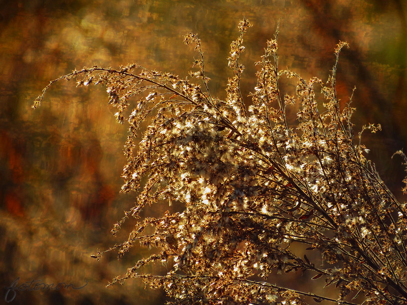 "01/25/12 - Winter Hues  My Blog:  http://maryanng.blogspot.com/2012/01/winter-hues.html  I really didn't want to post a picture of ragweed as my daily today, but I thought this was the best shot of the ones I quickly took on a photo drive down my favorite dirt road yesterday.   Here's the original:  <a href=""http://fotomom.smugmug.com/Nature/January-2012/20844772_Mzb9HP#!i=1685185588&k=HbN77Vt"">SmugMug Link</a>  Here's the texture I overlayed over it:  <a href=""http://fotomom.smugmug.com/Backgrounds/Miscellaneous/4845090_8MPtJf#!i=761430224&k=t9KYb"">SmugMug Link</a>  I did not desat the colors this time.   I also took and worked on this barn shot which I spent some time processing last night:  <a href=""http://fotomom.smugmug.com/Nature/January-2012/20844772_Mzb9HP#!i=1685703383&k=77fCVqt"">SmugMug Link</a>  It's a 3 shot HDR processed with <a href=""http://www.hdrsoft.com/"">Photomatix</a>, and then I applied the Orton Action which I downloaded from T<a href=""http://www.thecoffeeshopblog.com/"">he CoffeeShop Blog</a>.   Here's the original:  <a href=""http://fotomom.smugmug.com/Nature/January-2012/20844772_Mzb9HP#!i=1685184539&k=h2Sm2cM"">SmugMug Link</a>  Like the last winter barn scene I shot, it's just too full of branches and clutter:-(  I'll keep trying.  Thanks for your comments on my hand shot from yesterday:-)  HAGD, Maryann"