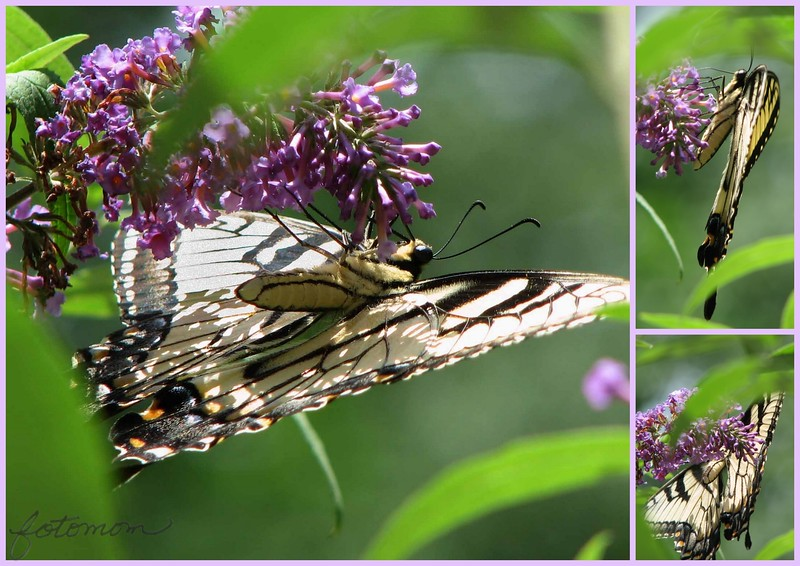 07/07/15 - The Study of a Butterfly