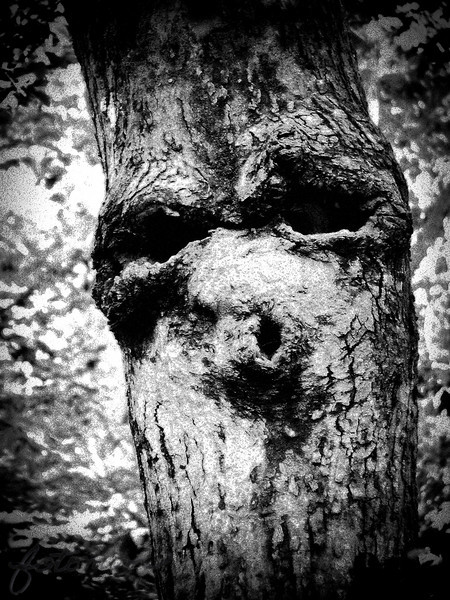 "04/28/11 - Boo!<br /> <br /> I took some iris shots yesterday, but they just aren't striking me as good enough to share today, so I'm back to a tree man shot from the zoo on Saturday.  At the end of the day, the boys and I had the choice of wait in a huge line for a shuttle back to our parking area or to walk about a mile on the trail that connects the two parking lots.  Let me stress just how spread out the NC Zoo is.  By the end of the day, if you've seen the whole thing, you've walked several miles.  With some amount of convincing, we started on the trail.  It's the first time we've taken that option, and at least I was not sorry we took it:-)  It's a hilly woodland trail with gravel and lots of photo ops.  I came around a corner and there this 'guy' was.  Handheld, low light and I took about 8 to make sure at least one was sharp enough.  I leaned my self up against another tree, and was thrilled when Joey knew instantly that the 'face' had caught my eye.  Way to go, Joe!  Obviously I have doctored it up a bit from the original to emphasize the slight spook factor and bring out the woody details.  And, no, this is not a reflection of my mood in particular although it has been a tough week.  It's just what caught my eye and seemed like something interesting and unique to share.<br /> <br /> Still cleaning and cleaning and cleaning...  <br /> <br /> Thanks for the comments on the pink peony.<br /> <br /> HAGD,<br /> Maryann<br /> <br /> Original shot:<br /> <br /> <a href=""http://fotomom.smugmug.com/Nature/April-2011/16471743_zf79D#1263293281_VHhj4rb"">http://fotomom.smugmug.com/Nature/April-2011/16471743_zf79D#1263293281_VHhj4rb</a>"
