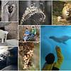01/18/14 - NC Zoo