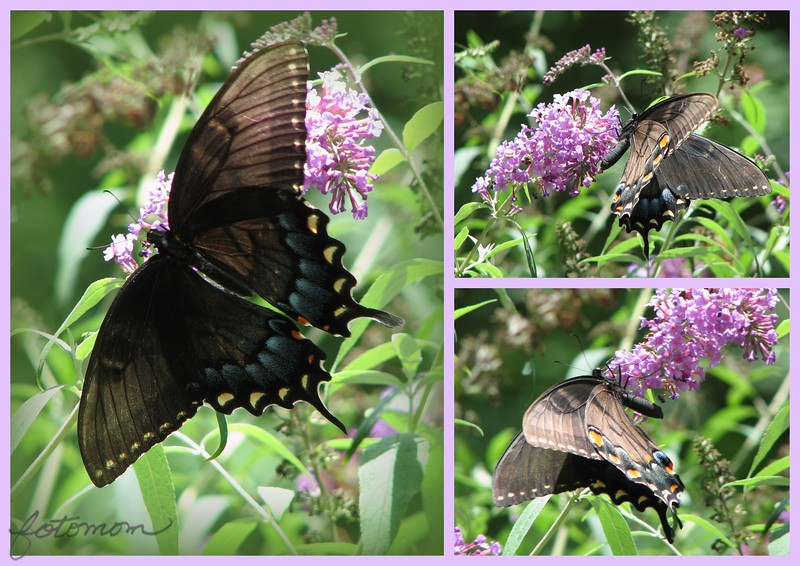 07/09/15 - More Butterfly Pics