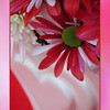 "02/11/12 - Valentine Romance  My Blog:  http://maryanng.blogspot.com/2012/02/valentine-romance.html  With all the beautiful flower captures that Susan at <a href=""http://wildelifephotography.smugmug.com/"">Wilde Life Photography</a> has been posting lately, I just had to go out and buy a bouquet.  I have been eyeing flowers for a week and finally saw a bunch that I really liked.  I had a heart-shaped vase in mind to put them in and a red felt background to set them in front of.   <a href=""http://fotomom.smugmug.com/Nature/February-2012/21295967_jprxmk#!i=1706983429&k=xLqgfBH"">SmugMug Link</a>  I didn't have a lot of time to work on pp'ing, so I went with the tight crop and using an out of focus shot for the background/framing.   With Valentine's Day quickly approaching, and thinking of the <a href=""http://sisterhoodofthebras.smugmug.com/"">sisterhoodofthebras</a>, I also took this image:  <a href=""http://fotomom.smugmug.com/Nature/February-2012/21295967_jprxmk#!i=1706572222&k=hcHzDzq"">SmugMug Link</a>  I may play with the flowers some more if I get a chance.  Meanwhile, they sure look nice on my kitchen table.  Donnie and I went to a stump burning at the Kidd's house (Madi) last night.  Danny has been working to get rid of this <a href=""http://www.arborday.org/treeguide/treedetail.cfm?id=129"">sweetgum tree</a> stump for 3 months now and finally decided to light it on fire last night.  The tree died a few years ago and then they had it cut down.  The stump remained and was taking up valuable garden space.  Danny started digging out around it, tried to have it pulled out with a chain/vehicle, and used various other techniques, and it just would not budge.  Kindof reminded me of the book <a href=""http://www.amazon.com/Berenstain-Bears-That-Stump-Must/dp/0679889639/ref=sr_1_5?ie=UTF8&qid=1328978175&sr=8-5"">That Stump Must Go!</a>  A great book by the way.  We have a copy.    Here are some pictures of the stump on fire.  It was huge, and the fire was hot underneath it when we left for the night.  I hear this AM that the stump is tipped over.  Woo hoo!  I'll have to get a daytime picture!  <a href=""http://fotomom.smugmug.com/Nature/February-2012/21295967_jprxmk#!i=1706991652&k=WBjB6vr"">SmugMug Link</a>  Thanks for your warm response to my tractor shot from yesterday...  HAGD, Maryann"