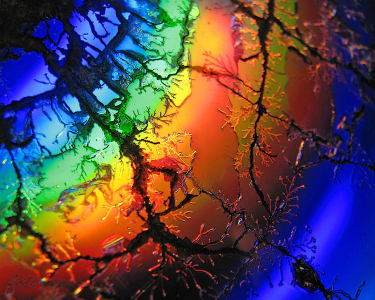 "01/28/12 - Rainbows  My Blog:  http://maryanng.blogspot.com/2012/01/rainbows.html  Today's daily is both inspired, pretty, and scientific.  What you're looking at is a macro of a CD (really a DVD) that was put in the microwave for 7 seconds.  A special thanks to <a href=""http://www.vandanaphotography.com/Photography/Photo-a-day/Daily-Photos-2008/4093660_Bh3TR8#!i=263528069&amp;k=itNdz"">Vandana</a> and <a href=""http://www.dmwardphotography.com/POTD-Gallery/365-Project/20845197_bPLCHk#!i=1688053125&amp;k=VM9HXNR&amp;lb=1&amp;s=A"">Dianne Ward</a> for their inspiration.  I saw their beautiful photos yesterday and was motivated to give it a try myself.    If you're wondering more about why CDs reflect rainbows, <a href=""http://electronics.howstuffworks.com/question52.htm"">here's a geeky explanation</a> that I understood.  I took about 250 pics, and the hardest part was holding everything still so as to not blur the images and actually taking images with the rainbow color that did not also contain a SP.  Hi!  <a href=""http://fotomom.smugmug.com/Nature/January-2012/20844772_Mzb9HP#!i=1688901541&amp;k=Lk6qmXX"">SmugMug Link</a>  This is the CD after 7 seconds in the microwave on high (my microwave is pretty powerful). &nbsp;Don't let the chemicals quickly igniting and burning out around 5 seconds cause you to jump too bad! &nbsp;It's just a small flash. &nbsp;Turning the fan hood on the stove on is a good idea too as there is a bit of a chemical smell for a few minutes.   <a href=""http://fotomom.smugmug.com/Nature/January-2012/20844772_Mzb9HP#!i=1688901801&amp;k=2HBVdgr"">SmugMug Link</a>  A couple other pics that I liked:  <a href=""http://fotomom.smugmug.com/Nature/January-2012/20844772_Mzb9HP#!i=1688902170&amp;k=KJZPLBT"">SmugMug Link</a>  <a href=""http://fotomom.smugmug.com/Nature/January-2012/20844772_Mzb9HP#!i=1689241351&amp;k=gkfhhVZ"">SmugMug Link</a>  <a href=""http://fotomom.smugmug.com/Nature/January-2012/20844772_Mzb9HP#!i=1689241368&amp;k=W8fTWrs"">SmugMug Link</a>  If you want to give this a try, experiment a lot with the angle you hold the CD relative to the lens. &nbsp;You can make it look like lightning or veins in the body or cracks in ice or wherever your imagination takes you. Most of all if you try it, have fun! &nbsp;Even Donnie was getting in on the act!  <a href=""http://fotomom.smugmug.com/Nature/January-2012/20844772_Mzb9HP#!i=1688902038&amp;k=MpQNC9G"">SmugMug Link</a>  My shots were mostly taken under a compact fluorescent light. &nbsp;It might be worthwhile to go out in the sun or try halogen or some other light source. &nbsp;Water or maybe oil on top might produce nice results too!  The comments you guys left on my B&W tree yesterday made my day.  Thanks!  HAGD, Maryann"