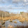 12/20/13 - All Quiet at the Wetlands