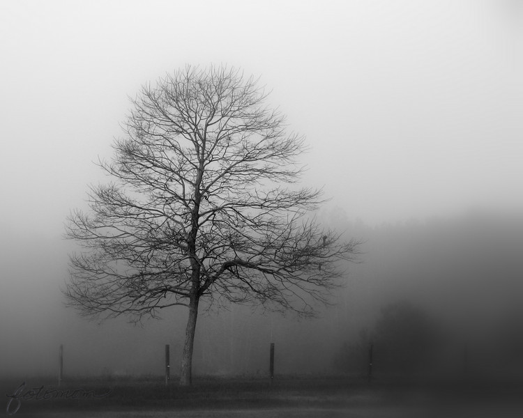 11/23/10 - Tree in the Fog<br /> <br /> I have been watching and studying this tree for a couple of years now.  Whenever there is fog, it seems to stand out from the backdrop...a solitary, lonely figure.  I finally made up  my mind yesterday to figure out where to park the car to get out to take a picture...not a small feat.  I do try to stay safe, but this location is more precarious than some.  Most days I am joyful as I spend time with the kids.  My life is full of laughter and color; it's vibrant and full of life like many of my pictures.  But some days at least deep inside it is like this too.  I guess a bit of that side is slipping through today.<br /> <br /> I stopped to think about my mother for a few minutes when I took this.  She was involved in a horrible traffic accident with a tractor trailer on a foggy morning in November just before Thanksgiving in 1985.  For me, the fog will always be more than just the fog.<br /> <br /> Back to bright and cheery tomorrow I promise...<br /> <br /> Thanks for your comments on Johnny and the Jon boat.  It was as serene out there as you thought.  Little wind, warm sun on our skin, very few boats out on the lake...a calming hour without the chaos of life.<br /> <br /> HAGD,<br /> Maryann