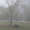 10/31/13 - Horse in the Fog