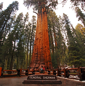 """June 14  Hey....Agilitypics....this one's for you!  Back to Sequoia Natl. Park - - - While we were standing in complete awe of the magnitude and magnificience of this incredible Sequoia tree, we met this darling couple from Belguim. During a nice visit, they asked me to take a picture of the two of them with their camera.  I then asked permission to take some shots of them w/my camera, and explained the DP community.  I told them of Agilitypics, and that I would direct this post to him!  They are:  Lien VanDuffel and Benny Janssens We had already given the borrowed pen back to its owner, when I asked what town they were from.  They pronounced it, and when I knew I wouldn't remember that, they told me  that the name would translate to """"Sunnyville""""?  Lien and Benny:  We really enjoyed our visit with you, and hope that you did also manage to visit Yosemite!? Here's a link to Agilitypics; he lives in the town of Ogy:  http://agilitypics.smugmug.com/  The General Sherman Heralded as """"the world's largest living organism"""", it has a base circumference of 102 ft, a diameter of 36 1/2ft, is 274 feet tall and has its first major branch 130 ft. above the ground.  This first branch has a diameter, at its connection to the tree trunk, of 7 ft!  The tree's trunk weighs about 1400 tons and contains enouch wood to build 40 or more houses. (Although we never found info with an approimate square footage  that they  were calculating these houses into their formula with).  Despite its estimated age of 2300 - 2700 years, the General Sherman Tree is growing vigorously.  Every year, the General sherman grows enough new wood to make a 60-foot-tall tree of usual proportions. The tree was named in 1879 by James Wolverton after the general under whom he had served during the Civil War.  In all the world, Sequoias grow naturally only on the west slope of the Sierra Nevada, most often between 5,000 and 7,000 feet of elevation.  There are some 75 groves in all.  Chemicals in the wood and bark pro"""