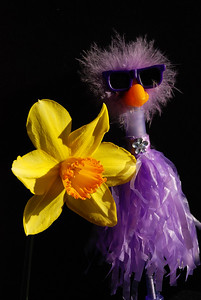 """February 25  Our son, Steven, presented me with the gift of this Pretty Purple Poultry Pen!!  He handed it to me saying """"I saw this in a store today, and it reminded me of you!""""  ROFLMAO !!!! """"Well, somehow that just has to be my photo for today!!""""  Later this afternoon, I was admiring the first of my Daffodils (through the camera lens!),  thinking one of those would be my DP!  Then, while the sunset was still high, I was nudged with the thought of sharing both of them....together!  I added a couple more in  my Contender gallery."""