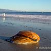 1.26.11<br /> <br /> On the beach, Santa Barbara, CA