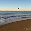 1.27.2011<br /> <br /> On the beach, Santa Barbara, CA