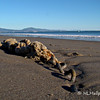 """3.2.11<br /> <br /> This wasn't far away from yesterdays """"seal"""" post. Not sure what this is, or was, but thought it was kind of interesting, and, of course, just being on the beach helps! Maybe some kind of tether? Best in X2."""
