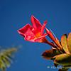 2.18.11<br /> <br /> Trumpet flower (I think).