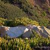 2.23.11<br /> <br /> East Beach cliffs, Santa Barbara, CA
