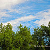 3.21.11<br /> <br /> White clouds, blue skies and green trees...<br /> <br /> Saw this view above the housetops on a recent walk and just couldn't resist taking a shot. It was one of those perfect days!