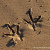 """2.21.11<br /> <br /> """"footprints"""" in the sand...<br /> <br /> Have a good Presidents Day to all who have the day off, to everyone else, have a good day!"""