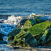 moss...<br /> <br /> I liked the bright green of the moss in the early morning light...<br /> <br /> East Beach<br /> Santa Barbara, CA<br /> <br /> Thanks for your comments!<br /> <br /> Critiques welcome...<br /> <br /> March 30, 2013