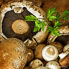 """M"" is for Mushrooms,<br /> for Donna's Alphabet Challenge...<br /> <br /> These mushrooms were cooked up shortly after I made this shot. I enjoy the larger portabellos in sandwiches/burgers and the smaller crimini are delish when diced, sauteed and used as a topping over rice, potatoes, etc...assuming you like mushrooms! : )<br /> <br /> Thanks your viewing and commenting on my 'Fall leaves' post yesterday!<br /> <br /> Critiques welcome...<br /> <br /> Don't be selfish; don't try to impress others. Be humble, thinking of others as better than yourselves. Don't look out only for your own interests, but take an interest in others, too. Philippians 2:3-4 NLT <a href=""http://www.biblegateway.com"">http://www.biblegateway.com</a><br /> <br /> 6 October 2013"
