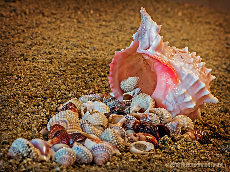 """""""S"""" is for Seashells<br /> for Donna's Alphabet Challenge...<br /> <br /> This wasn't my original """"S"""" shot, I'll post that one tomorrow. But, while I was thinking what I could use for """"S"""" day, my wife mentioned to me she had some seashells, could I use them? Turned out I could...and did! This shot isn't at the beach, but was set up on our kitchen table! Fortunately, I had a bit of unused sand that came in handy!<br /> <br /> I appreciate your views and comments, thank you!<br /> <br /> Critiques welcome...<br /> <br /> Fearing people is a dangerous trap, but trusting the Lord means safety. Proverbs 29:25 NLT <a href=""""http://www.biblegateway.com"""">http://www.biblegateway.com</a><br /> <br /> 17 November 2013"""