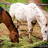"""Ray's Equestrian Center,<br /> a close up shot of yesterdays' post, here:  <a href=""""http://smu.gs/YpAv74"""">http://smu.gs/YpAv74</a><br /> <br /> Schabarum Regional Park<br /> Rowland Heights, CA<br /> <br /> Thanks for stopping by, and for your comments!<br /> <br /> Critiques welcome...<br /> <br /> March 12, 2013"""