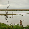 """early morning reflections...<br /> <br /> I copied the Curlew into this scene, thought it added a little interest...the original can be viewed here: <a href=""""http://smu.gs/12lVCO3"""">http://smu.gs/12lVCO3</a><br /> <br /> Bolsa Chica Wetlands<br /> Huntington Beach, CA<br /> <br /> Thank you for your comments on my """"rope"""" post yesterday, much appreciated!<br /> <br /> Critiques welcome...<br /> <br /> 20 August 2013"""