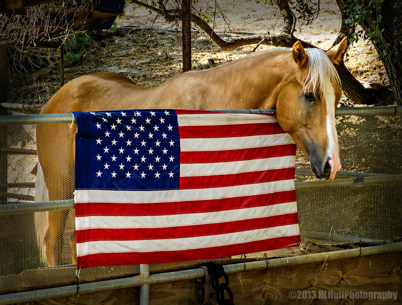 """Ransom...<br /> <br /> Meet Ransom, a beautiful four year old palomino. His owner was kind enough to get him to pose by Old Glory that she had hung on his corral. <br /> <br /> Schabarum Regional Park<br /> Rowland Heights, CA<br /> <br /> Thank you for your comments on my """"H"""" for Harlequin bug post yesterday!<br /> <br /> Critiques welcome...<br /> <br /> Happy Labor Day!  2 September 2013"""