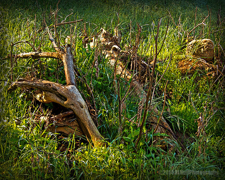 Morning light...<br /> <br /> Nothing special in this shot, just liked the way the morning light was striking the grass and dead tree branches...<br /> <br /> Schabarum Regional Park<br /> Rowland Heights, CA<br /> <br /> Thank you for your views and comments!<br /> <br /> Critiques welcome...<br /> <br /> 8 May 2014